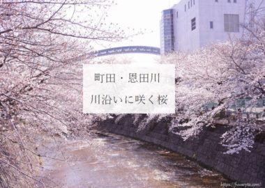 eye-onda-river
