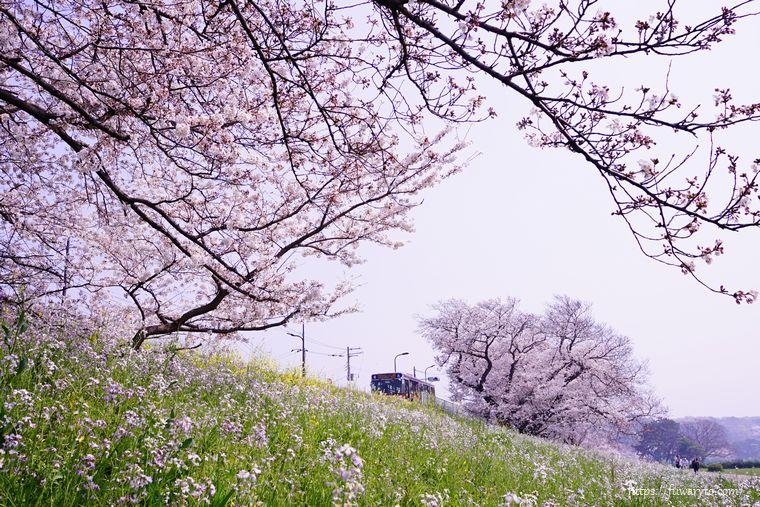 多摩堤通りを走るバスと桜♪ レンズ:SEL24F18Z
