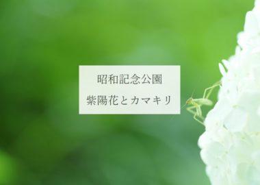 昭和記念公園・紫陽花アイキャッチ
