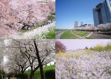 アイキャッチ・ガス橋の桜